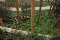 Xeriscaping Landscaping Living In Harmony